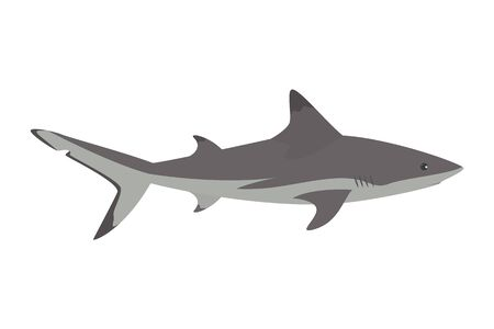 grey shark vector isolated. Underwater wildlife, dangerous predator with sharp teeth. Sea and ocean fish.