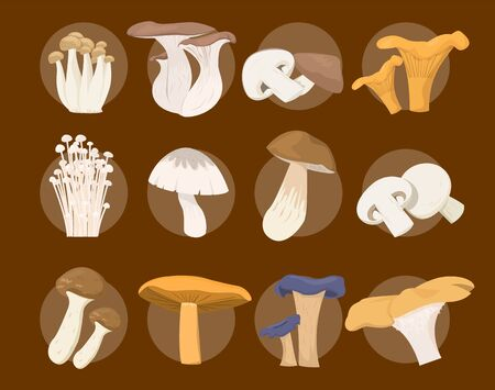 Mushroom collection vector isolated. Organic food, set of edible fungus. Healthy vegetable from the forest. Ilustrace
