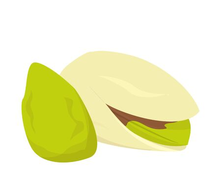 Pistachio nut vector isolated. Healthy snack, green seed in the shell. Oragnic natural ingredient.