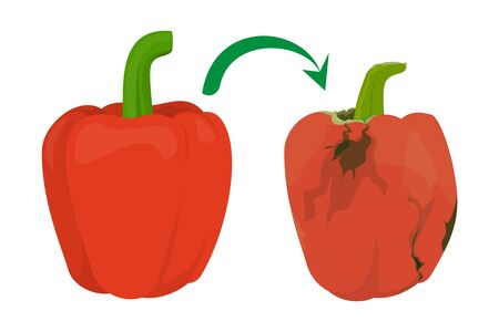Red shiny bell pepper become rotten vector isolated. Vegetable ingredient rotting. Tasty delicious food.