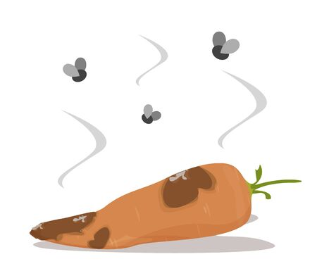 Fresh and delicious carrot become rotten vector isolated. Vegetarian ingredient, orange vegetable. Food organic waste. Fly insect flying around the vegetable.