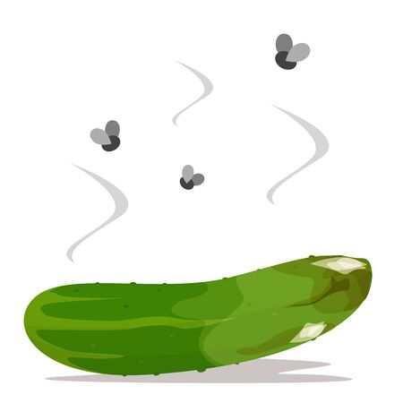 Fresh green cucumber become rotten and bad vector isolated. Food waste. Dirty meal full of bacterium, fly insects flying around.