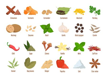 Set of spices vector isolated. Garlic, cinnamon and ginger. Cooking ingredients, aroma herbs. Mint and basil.