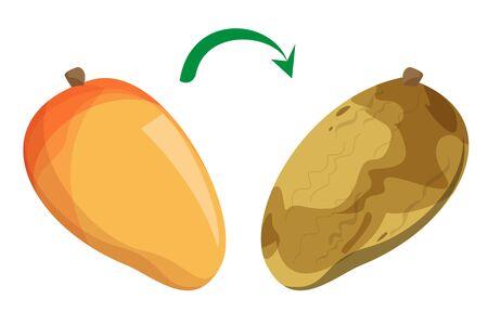 De délicieuses mangues fraîches devenant un vecteur pourri isolé. Fruits gâtés avec des champignons, déchets alimentaires. Nutrition biologique naturelle. Repas pourri, ingrédient tropical endommagé.