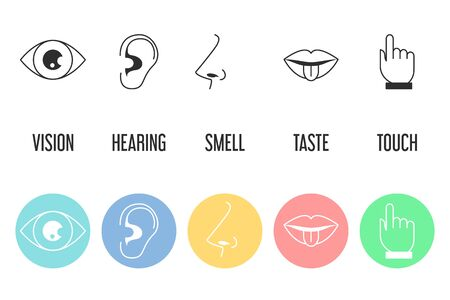 Five senses icon set. Vector isolated illustration of human perception. Taste, touch, hearing, smell and vision. Sensory organs.
