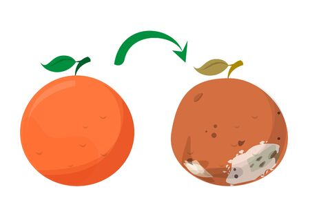 Bad rotten grapefruit. Food waste vector isolated. Citrus fruit rot, vegetarian meal becoms bad. Fresh and tasty grapefruit becomes spoiled. Vetores