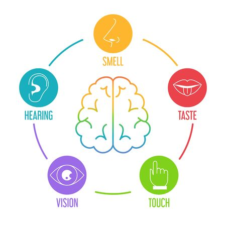 Five human senses icon set. Vector isolated illustration of human perception. Taste, touch, hearing, smell and vision. Sensory organs. Brain icon Ilustración de vector