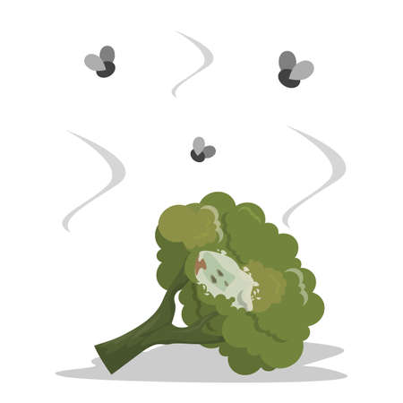 Fresh delicious green broccoli becomes rotten vector isolated. Rotting ingredient with mold on it. Food waste, insecta flying arount the object