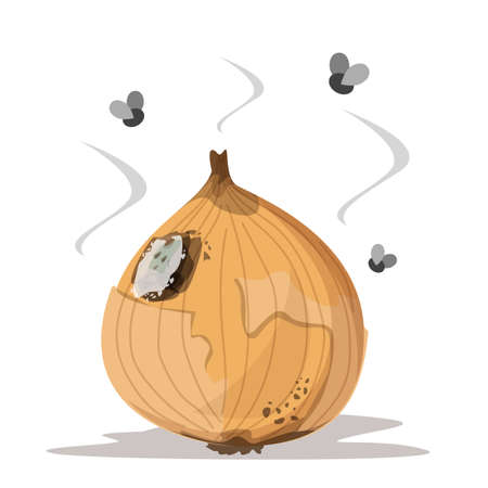 Fresh onion becomes rotten vector isolated. Rotting product, mold on the onion, damaged meal. Insects flying around the vegetable. Ilustrace