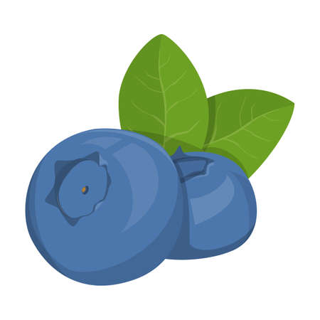 Sweet blueberry vector isolated. Illustration of a delicious, healthy berry. Organic nutrition, shiny ripe berries with green leaf
