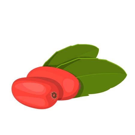 Barberry vector isolated. Natural, healthy food, red berry. Organic product full of vitamins. Green leaf and berry. Ilustrace