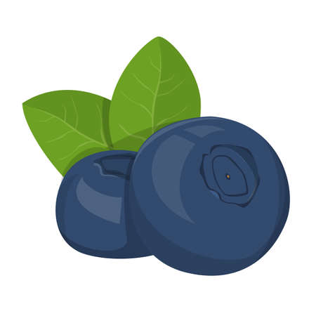 Bilberry vector isolated. Raw organic product, blue berry and green leaf. Organic, natural nutrition. Summer plant.