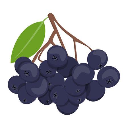 Black rowan berries vector isolated. Branch of plant, organic healthy product. Black berry, harvest season.