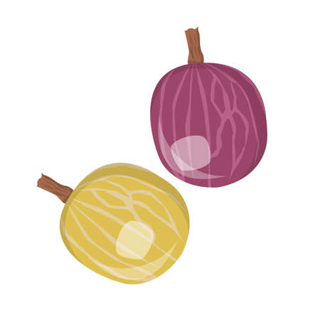 Green and red gooseberry vector isolated. Natural ingredient, vegetarian food. Raw ripe berries. Sweet products full of vitamins.  イラスト・ベクター素材