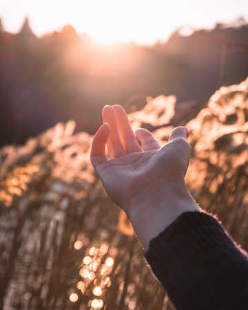 Hand reaching to the sun, wheat field on the background. Beautiful sunset, golden shine on the hand. Spring and summer season. Beautiful view on nature.