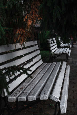 White bench in the park. Autumn season, evergreen tree. Place for relaxation and recreation. Benches in a row and fir above them. Recreational place. Фото со стока