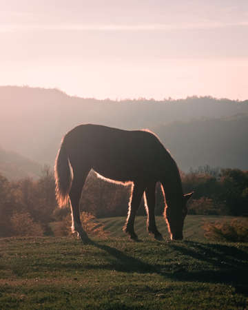 Horse on pasture eating grass, sunset light. Beautiful nature, rural outdoor view. Brown horse and mountains on the background.