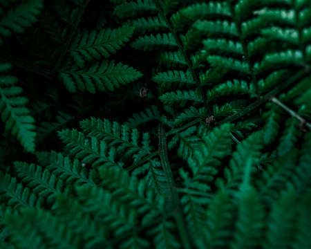 Macrophotography of a fern. Closeup of a green leaf, beautiful nature in tropical climate. Exotic plant. Botanical background. Фото со стока