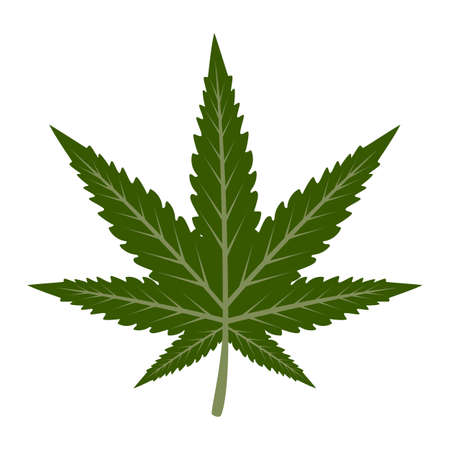 Marijuana leaf vector isolated. Medical green plant. Symbol of narcotic.