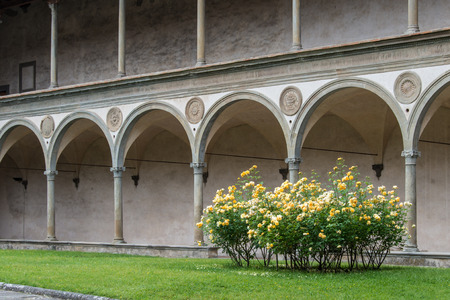 Partial view of the Cloister of Brunelleschi in the Basilica of Santa Croce in Florence with a bush of white and yellow roses in the foreground