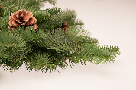 green fir-tree twigs with cones on a white background