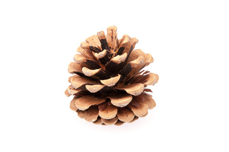 Isolated cone on a white background closeup