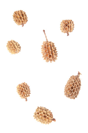 Isolated cones on a white background closeup
