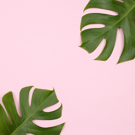 Tropical palm leaf on pink background. Flat lay, top view. Summer background.
