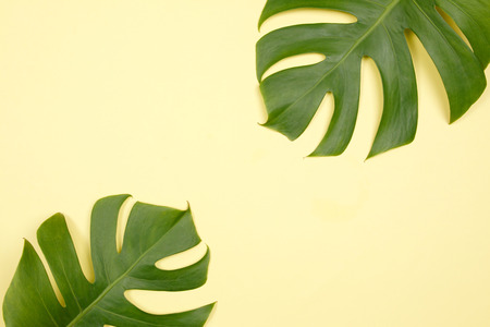Tropical palm leaf on yellow background. Flat lay, top view. Summer background.