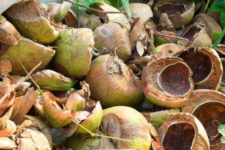 drank: Division coconut shell after drank juice.
