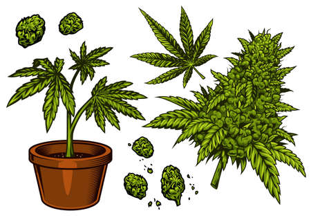 Set of cannabis objects Illustration