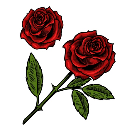 Single beautiful red rose illustration