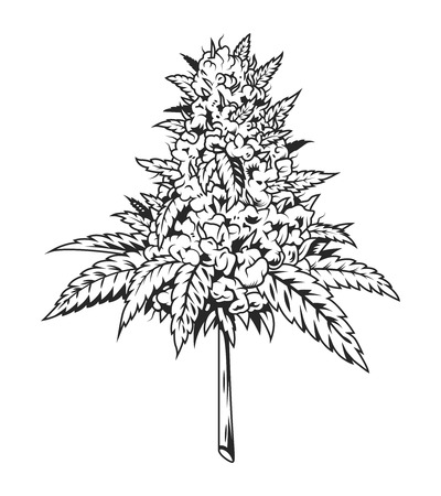 Vintage monochrome marijuana plant concept Standard-Bild