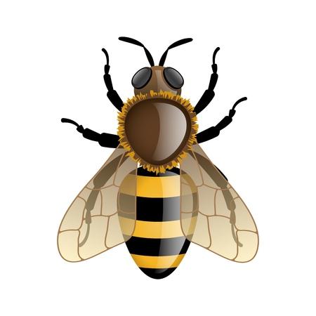 Bee geïsoleerd op wit