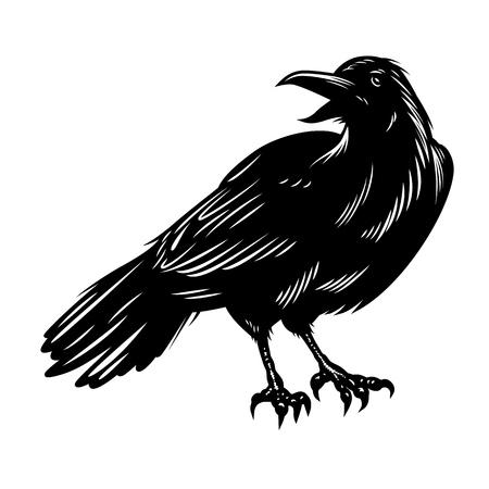 Corbeau noir isolé sur blanc