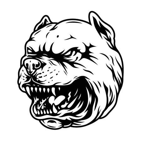 Vintage angry pitbull head concept in monochrome style isolated vector illustration