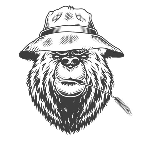 Serious bear head wearing hat and wheat ear in his mouth in vintage monochrome style isolated vector illustration