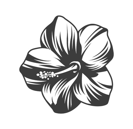 Beautiful blooming hibiscus flower in vintage monochrome style isolated vector illustration