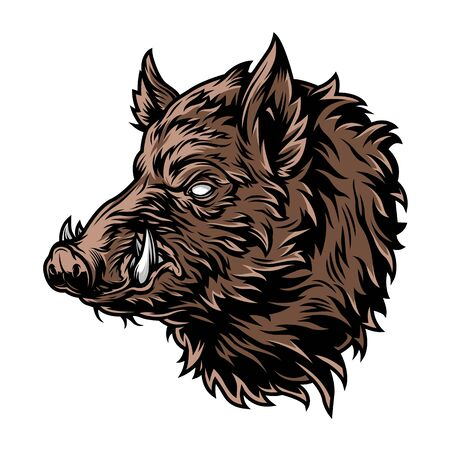Colorful vintage wild boar with tusks on white background isolated vector illustration