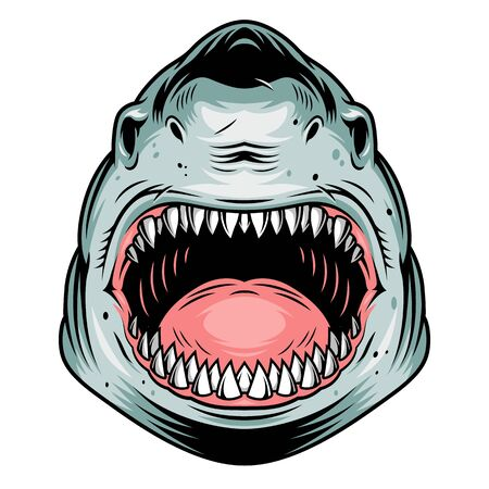 Colorful aggressive shark head concept in vintage style isolated vector illustration