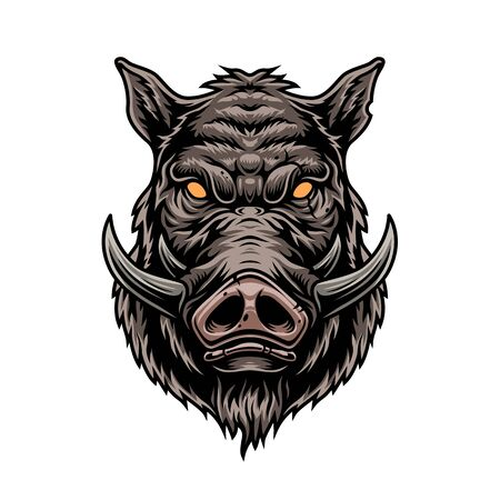 Cruel wild boar colorful vintage template on white background isolated vector illustration Illustration