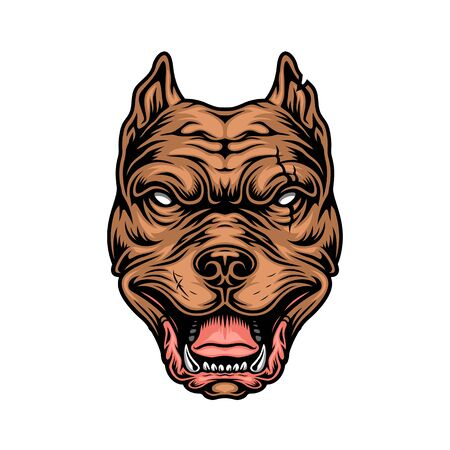 Vintage colorful cruel pitbull head on white background isolated vector illustration