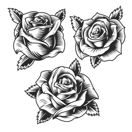 Vintage beautiful rose flowers set in monochrome style isolated vector illustration Standard-Bild - 133464181