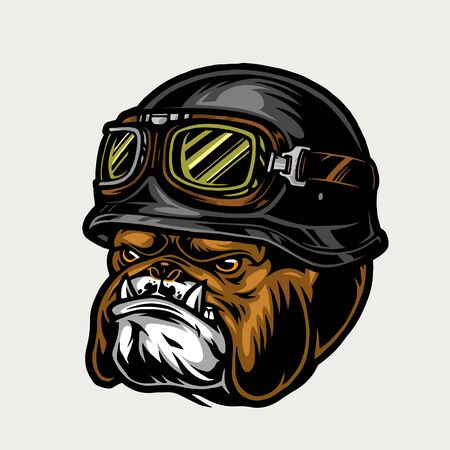 Colorful aggressive biker bulldog head wearing moto helmet and goggles in vintage style isolated vector illustration