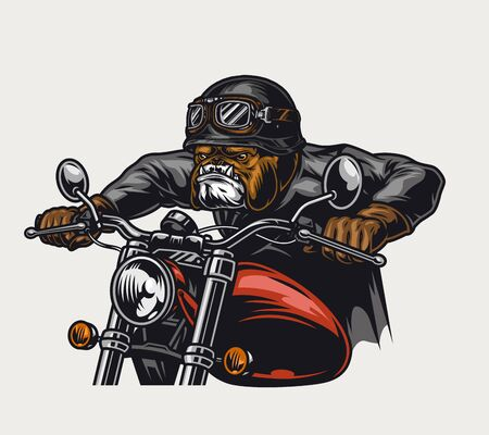 Animal biker vintage colorful concept with cruel bulldog head rider driving motorcycle isolated vector illustration