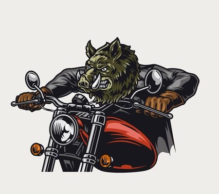 Colorful dangerous wild boar head motorcyclist riding motorbike in vintage style isolated vector illustration