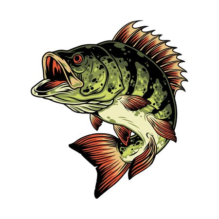 Bass fish colorful concept in vintage style isolated vector illustration
