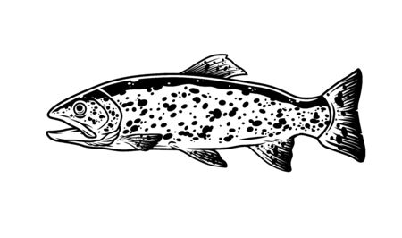 Trout fish vintage monochrome template isolated vector illustration