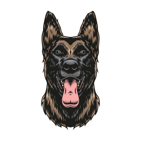 Belgian malinois dog colorful vintage template on white background isolated vector illustration Illustration