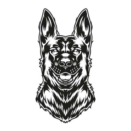 German shepherd dog in vintage monochrome style isolated vector illustration Illustration